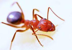 Jak na hubení mravenců?