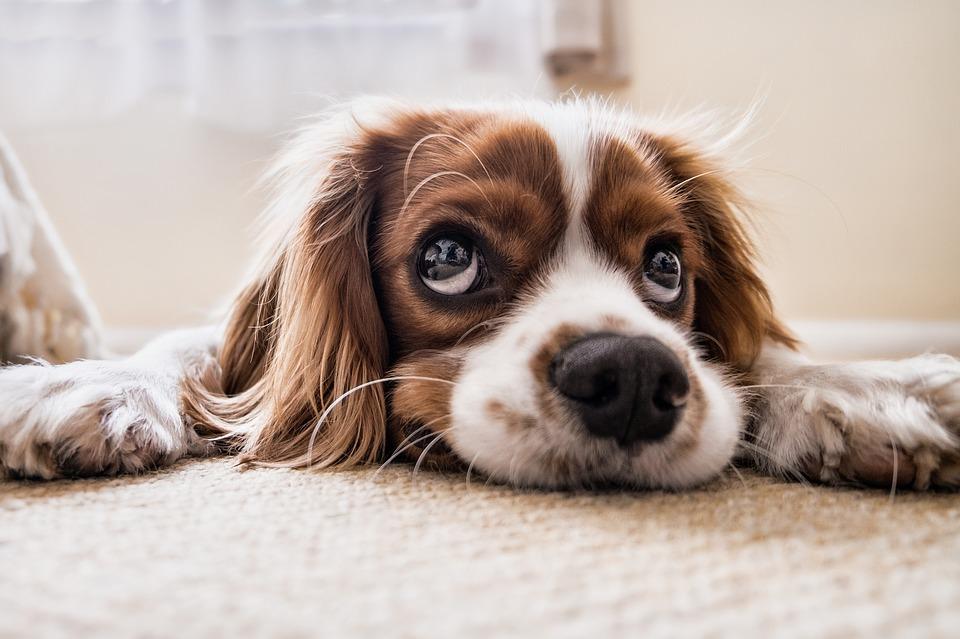 Nemocný pes