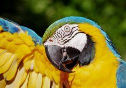 Jaké papoušky chováme nejčastěji a co potřebují?