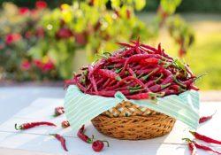Nejzajímavější druhy chilli. Ochutnejte je