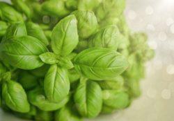 Rostliny, které mají léčivé účinky. Určitě vás ohromí